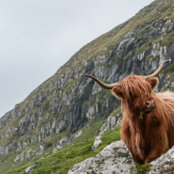 Šotimaa reis. Sandberg Reisid