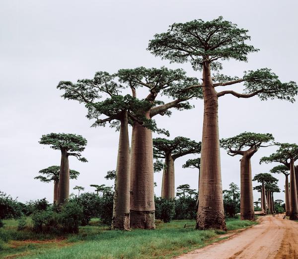 Madagaskari reis. Sandberg Reisid