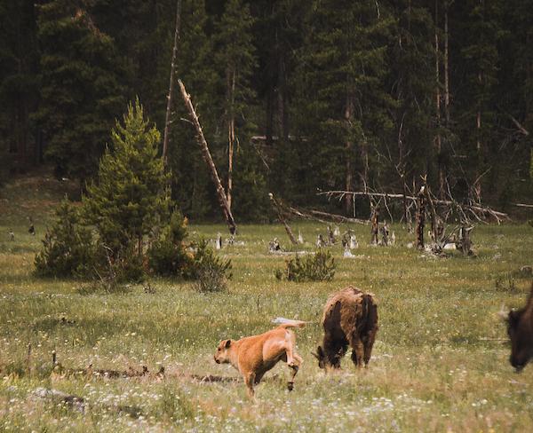 Ameerika Rahvuspargid. Sandberg Reisid