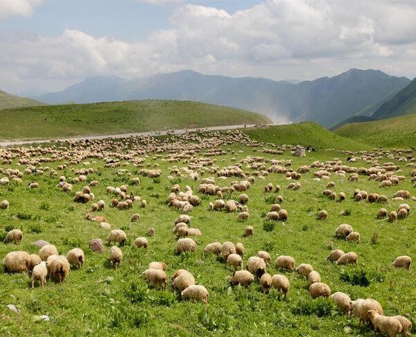 Kaukaasia reis. Sandberg Reisid