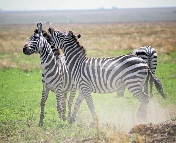 Sansibar ja Tansaania safari. Sandberg reisid