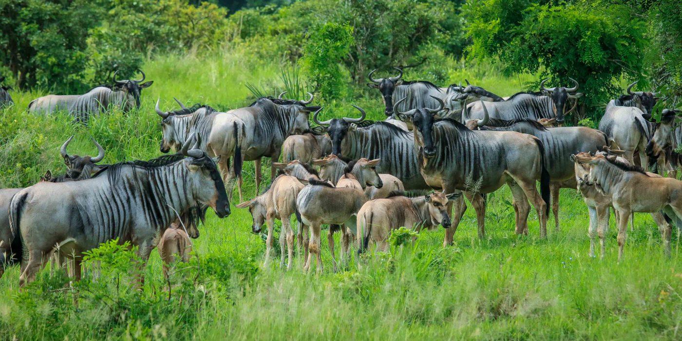 Sansibar ja Tansaania safari